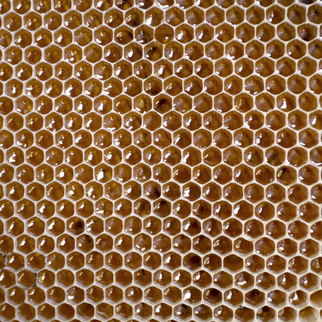 """Honeycomb frame full with honey"" stock image"