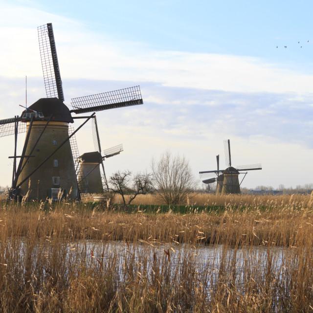 """Kinderdijk early morning sun"" stock image"