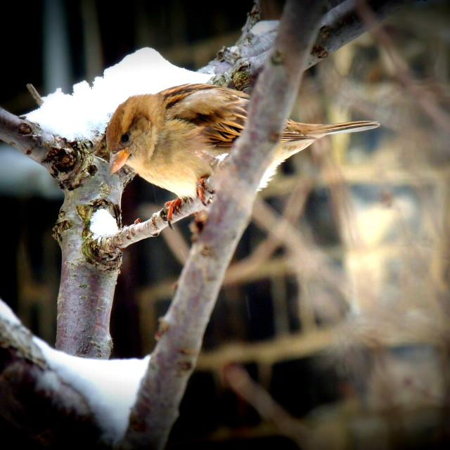 """""""Little bird"""" stock image"""