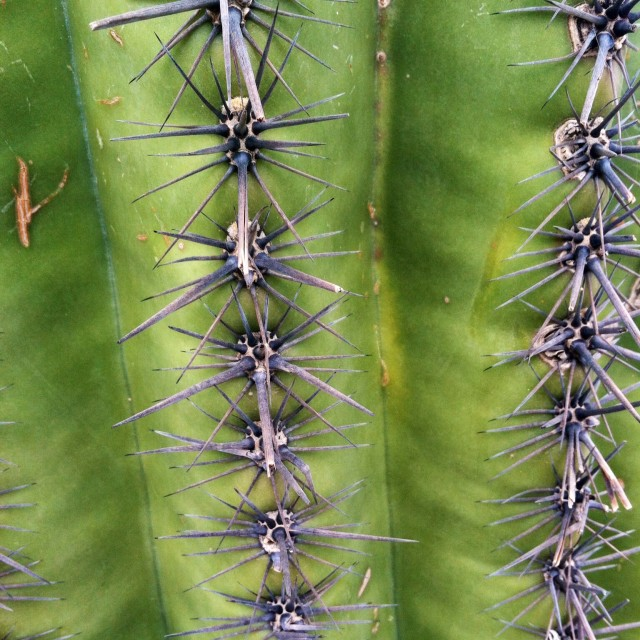 """Close up cactus"" stock image"