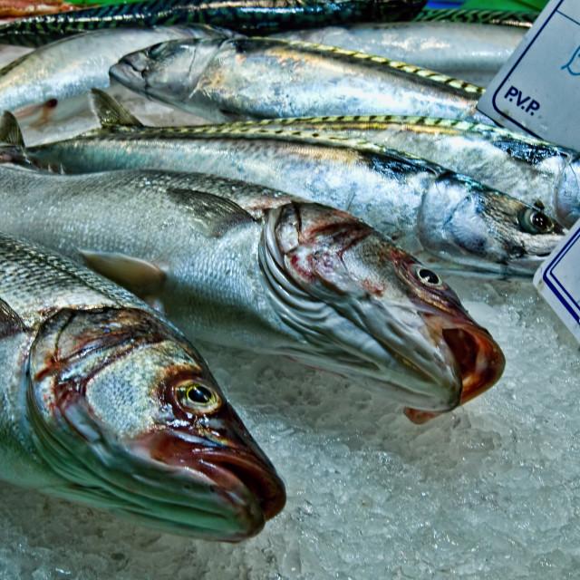 """Market stall fish on ice"" stock image"