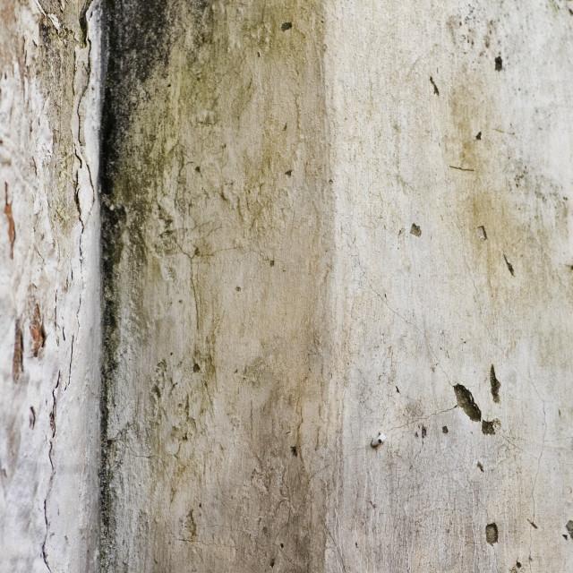 """moldy wall"" stock image"