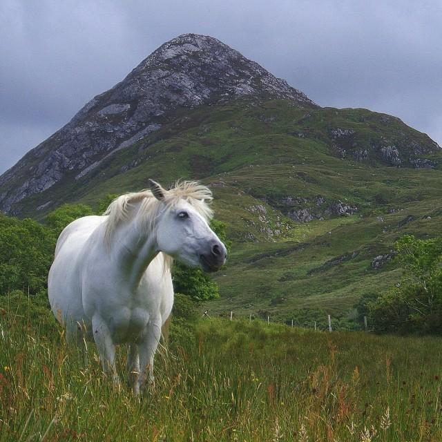 """""""Wild Ponies"""" stock image"""