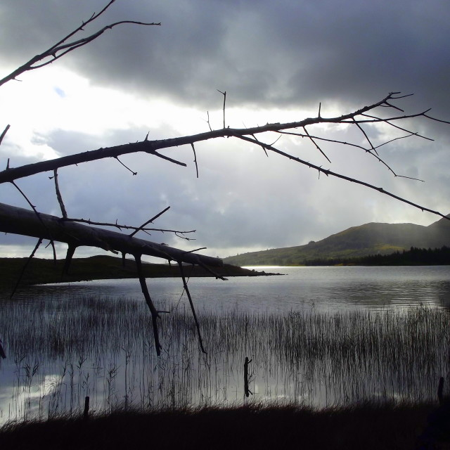 """Winter Tree, Lough Inagh"" stock image"