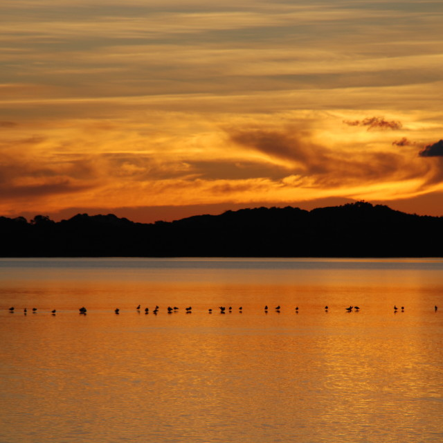 """Birds Enjoy a Sunset"" stock image"