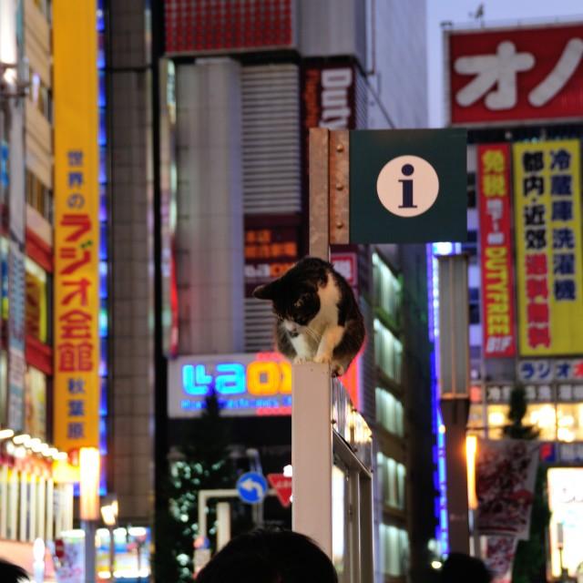 """""""Tokyo Roadsign cat"""" stock image"""