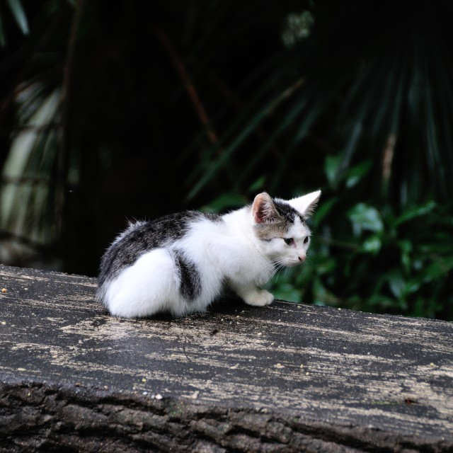 """Kyoto stray cat"" stock image"