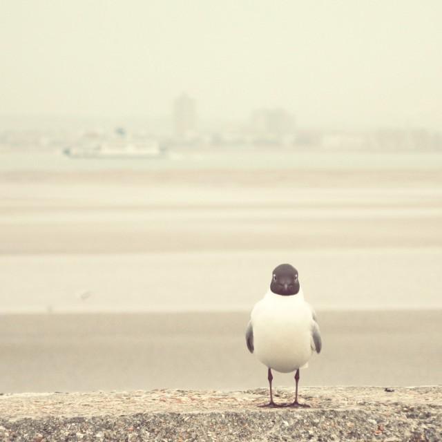 """""""Gazing gull"""" stock image"""
