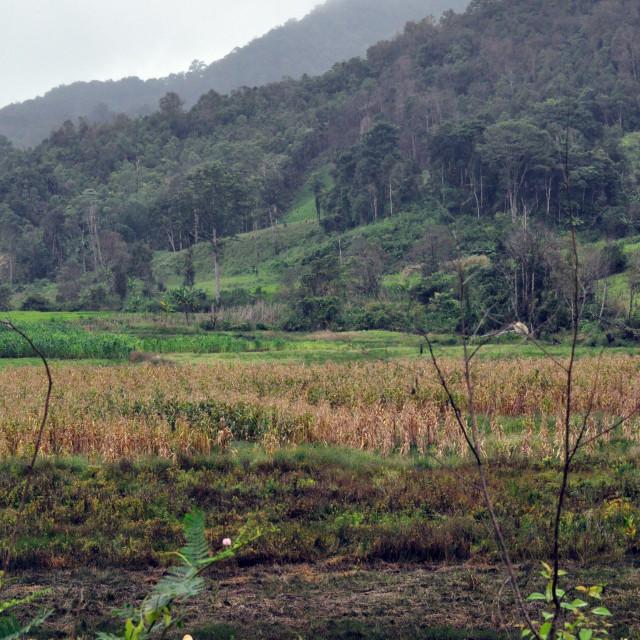 """Traditional thai farming"" stock image"