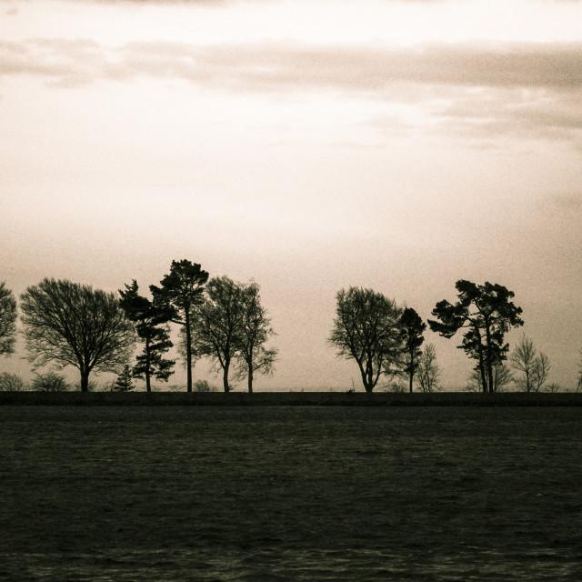 """""""Treeline"""" stock image"""