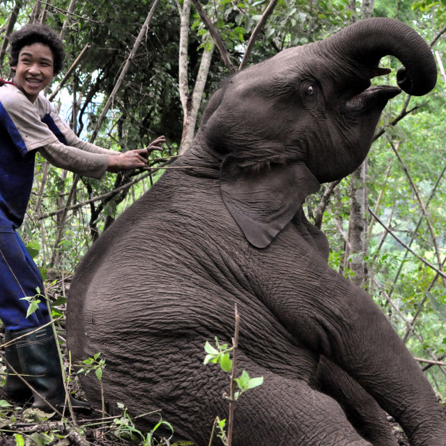 """One boy and his elephant"" stock image"
