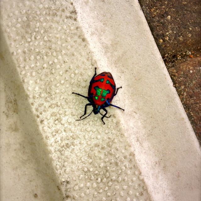 """Pretty Pretty Beetle"" stock image"