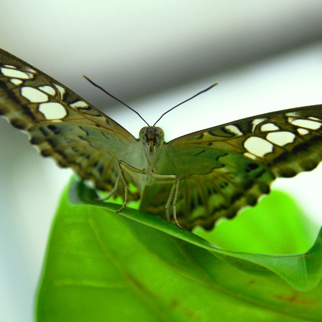 """Butterfly"" stock image"