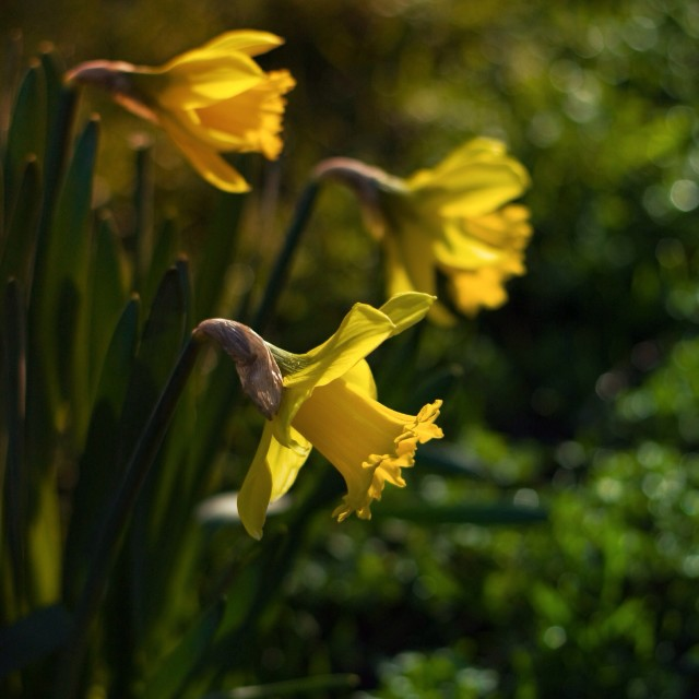 """""""Spring is on it's way"""" stock image"""