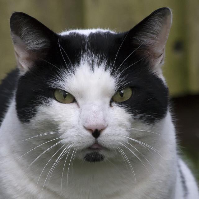 """Cat."" stock image"