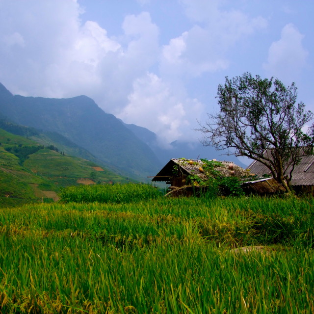 """Sapa Countryside"" stock image"