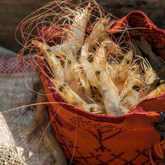 """Shrimp in a Typical Bag"" stock image"