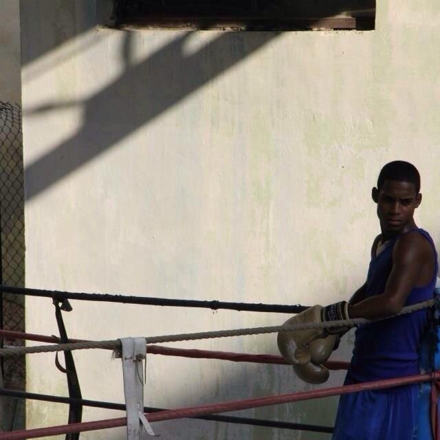 """Boxer, Havana"" stock image"