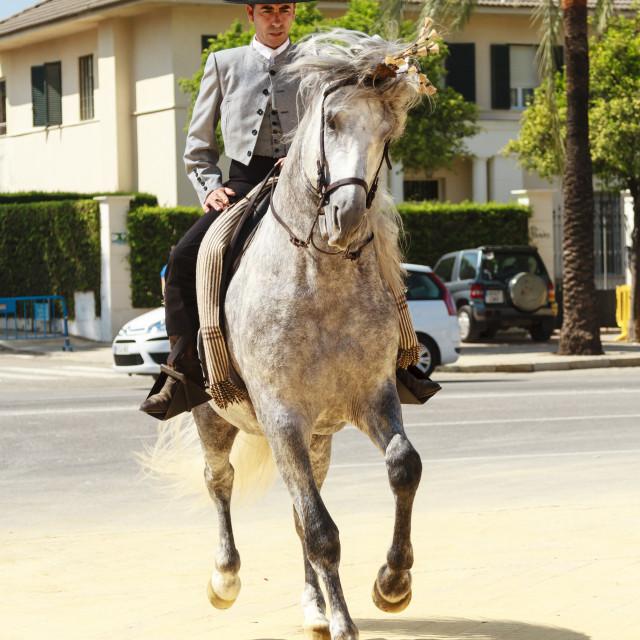 """""""Prancing Horse"""" stock image"""