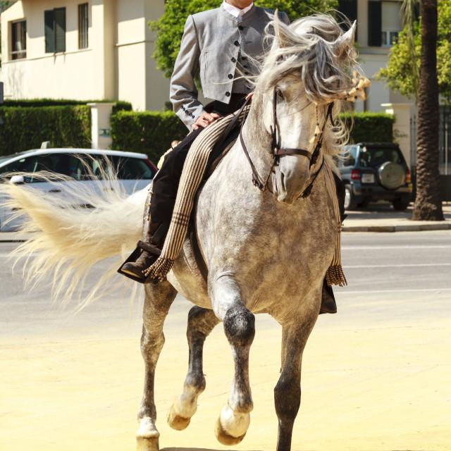 """Dancing Horse"" stock image"