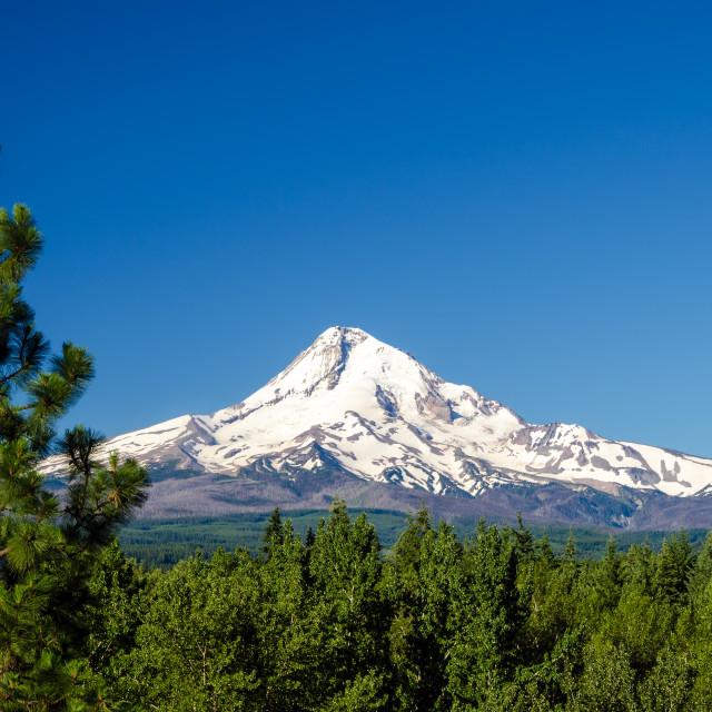 """Mt. Hood and Pine Trees"" stock image"