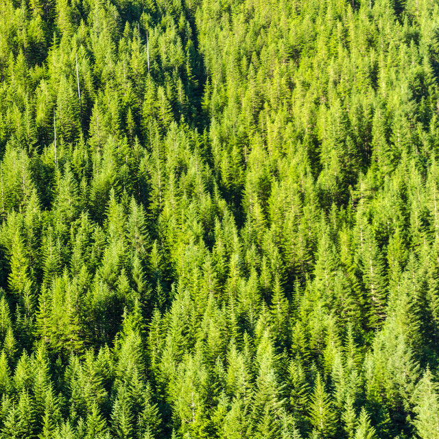 """Dense Forest"" stock image"