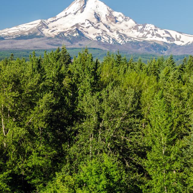 """""""Mt. Hood Vertical"""" stock image"""
