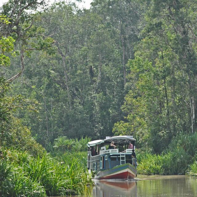 """Rainforest river cruise"" stock image"