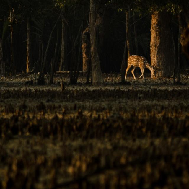 """""""Distant Deer"""" stock image"""