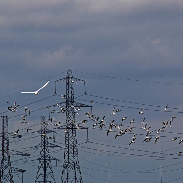"""Flock of gulls,"" stock image"