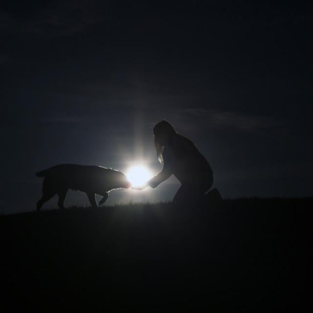 """""""Feeding the dog"""" stock image"""
