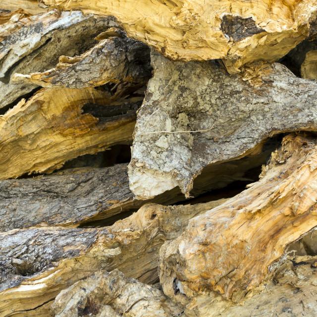 """Dry firewood"" stock image"