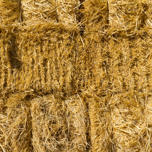 """""""Wall of dried straw"""" stock image"""