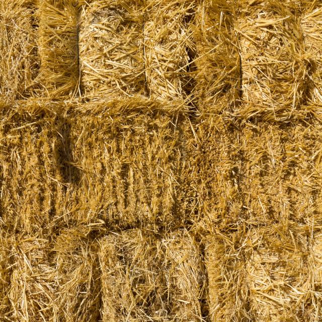 """Dried straw"" stock image"