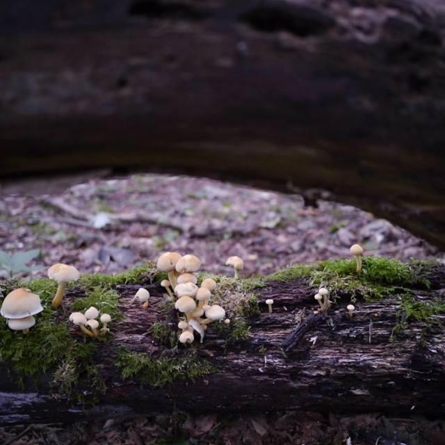 """""""Mushrooms on a Tree"""" stock image"""