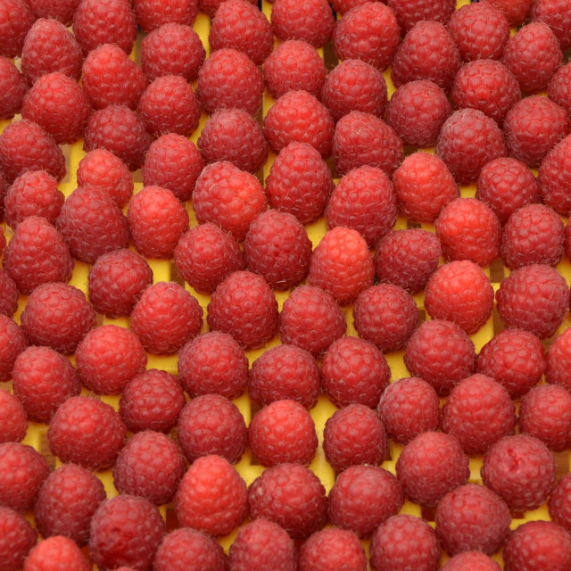 """Raspberries."" stock image"