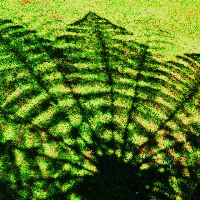 """Shade of Tree Fern"" stock image"