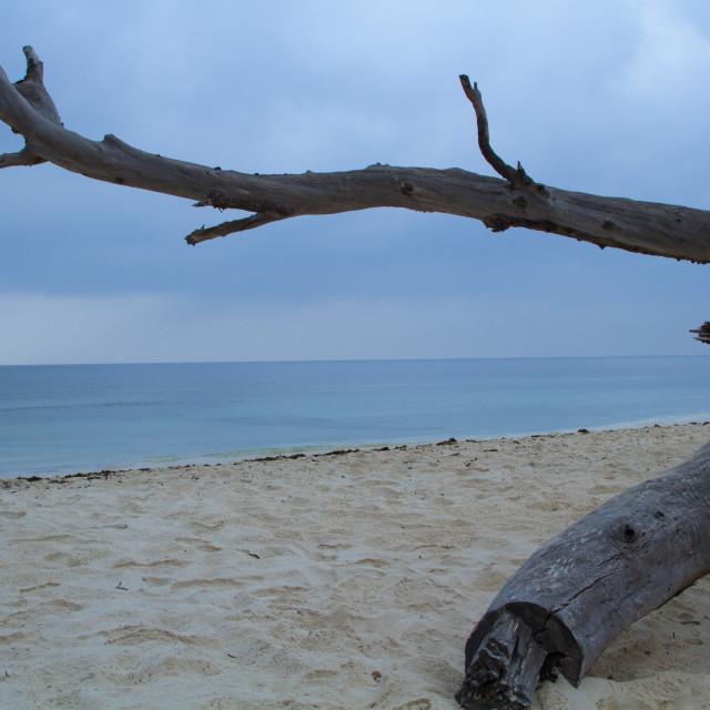 """Morning Walk on the Beach"" stock image"