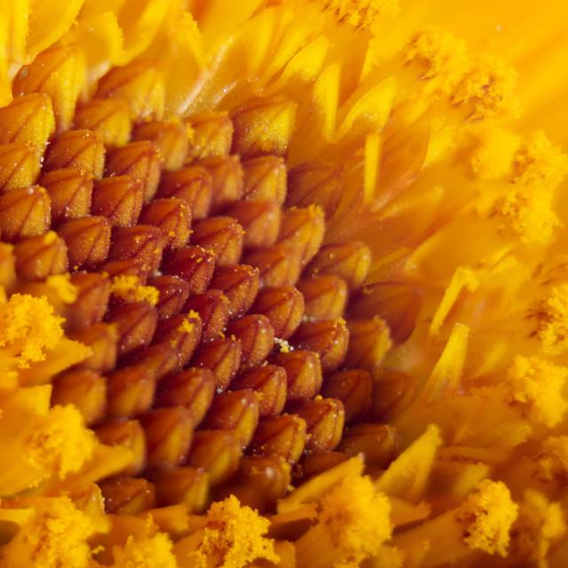 """Macro flower"" stock image"