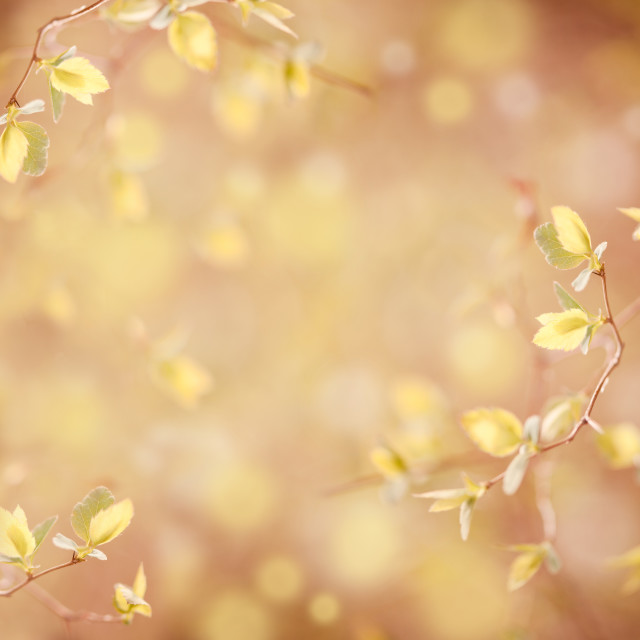 """spring leaves on blurred background"" stock image"