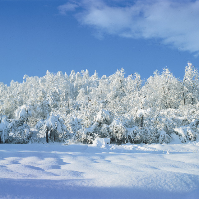 """Winter idyll"" stock image"
