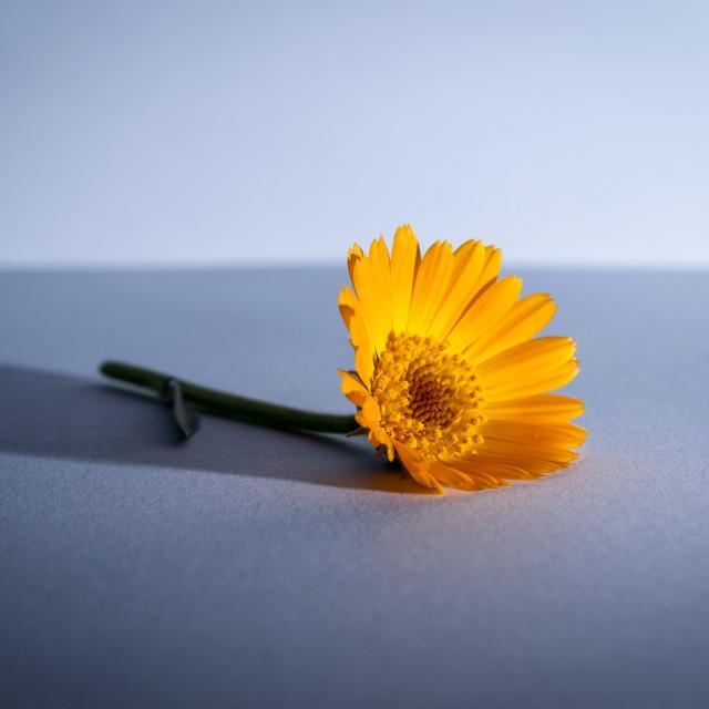 """""""spring flower"""" stock image"""