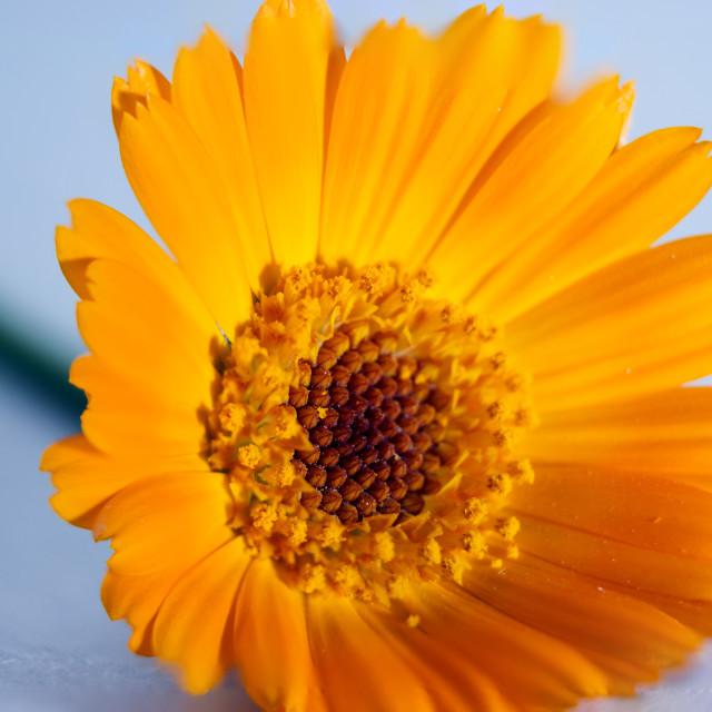 """""""Flower"""" stock image"""