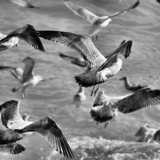 """""""'Gulls'"""" stock image"""