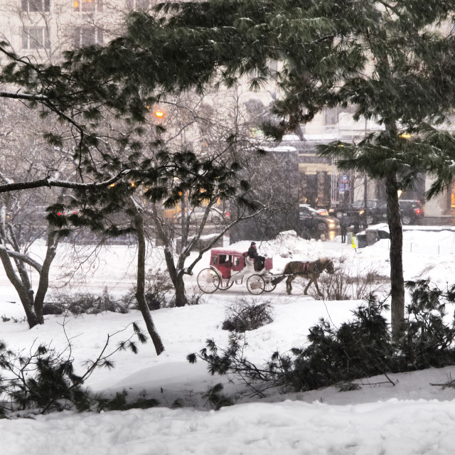 """Central Park Carriage"" stock image"
