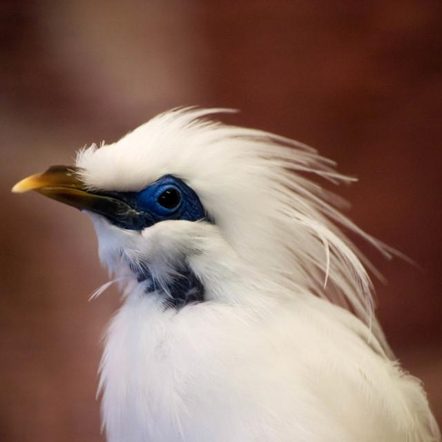 """Bird Profile"" stock image"
