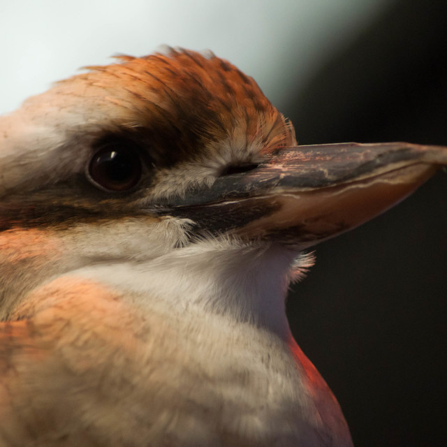 """""""Bird Closeup"""" stock image"""
