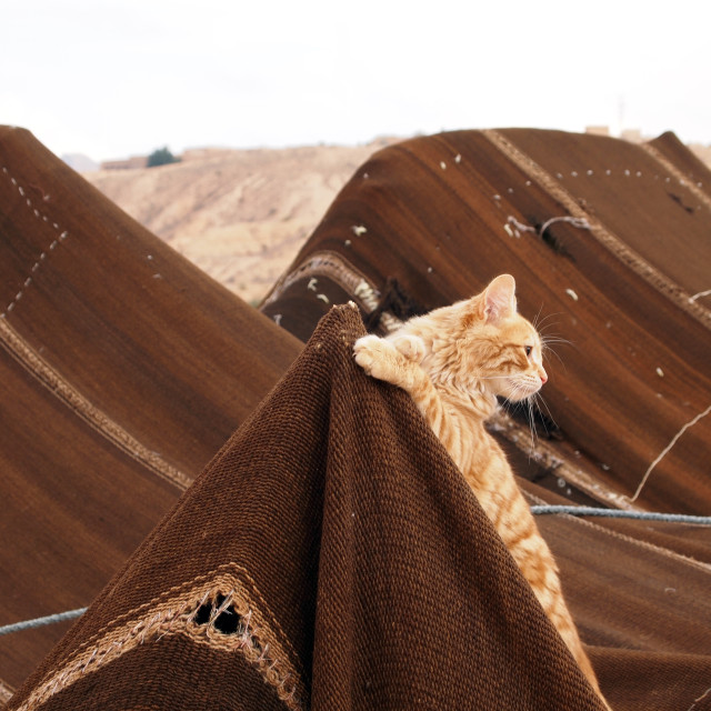 """Cat on tent"" stock image"