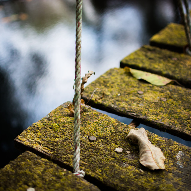 """rope bridge in the jungle"" stock image"