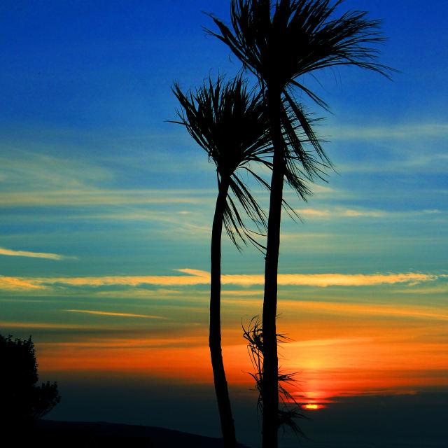 """'Sunset Palms'"" stock image"
